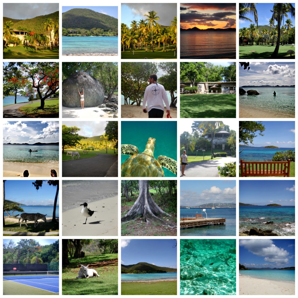 CaneelBaycollage2